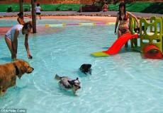 dog aquapark