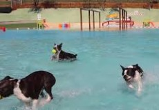 dog aquapark1