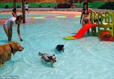 dog aquapark